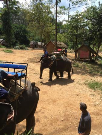 photo0.jpg - Picture of Phang Nga Elephant Park, Phang Nga ...