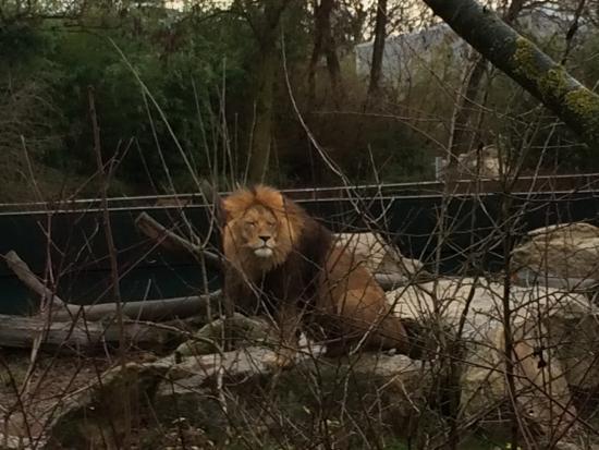 巴伐利亚州立动物园