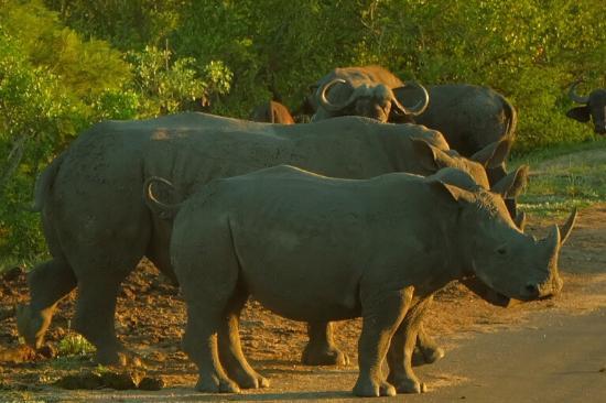 Parque Nacional Kruger, Sudáfrica: photo3.jpg