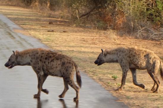Parque Nacional Kruger, Sudáfrica: photo4.jpg