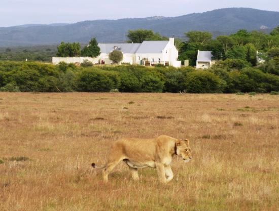 Great Safari at an easy to get at non malarial lodge