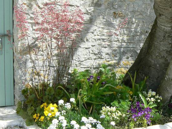 Longèves, France : pied figuier jardin