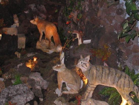 Zafferana Etnea, Italia: Museo Fauna e flora dell'Etna