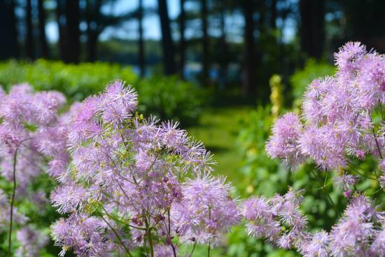 Poland, ME: Beautiful gardens at the Wolf Cove Inn