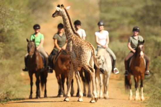 Pongola, Южная Африка: Riding holidays in Africa