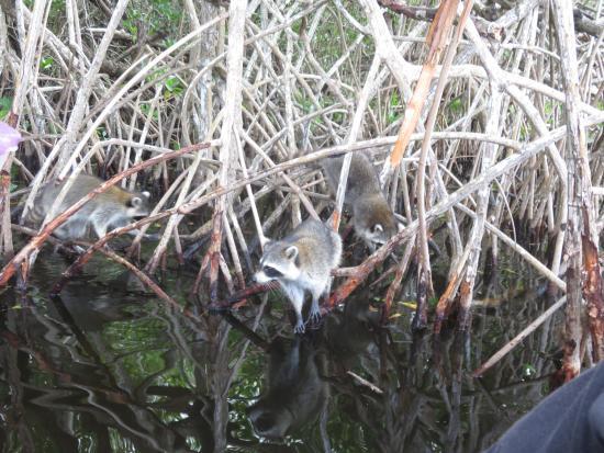 Everglades City Resmi