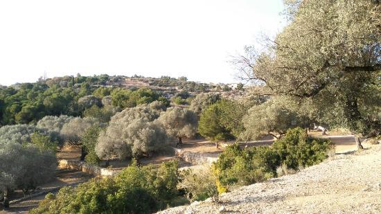 Alcanar, Spanien: Oliveras milenarias al pie de La Moleta del Remei