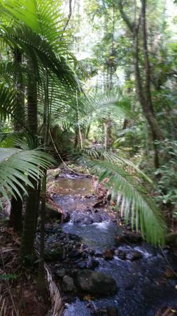 Cow Bay, Австралия: Im Daintree Discovery Center