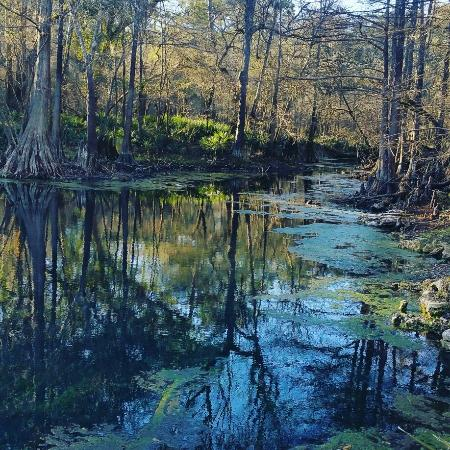 Live Oak, ฟลอริด้า: Wes Skiles Peacock Springs State Park