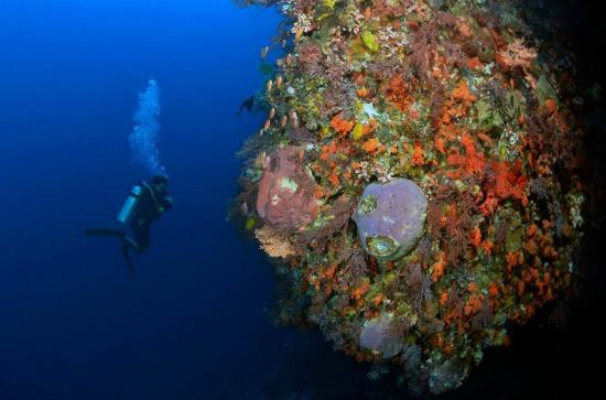 Rote >> Scuba Diving In Rote Picture Of Serai Inar Eco Resort Rote