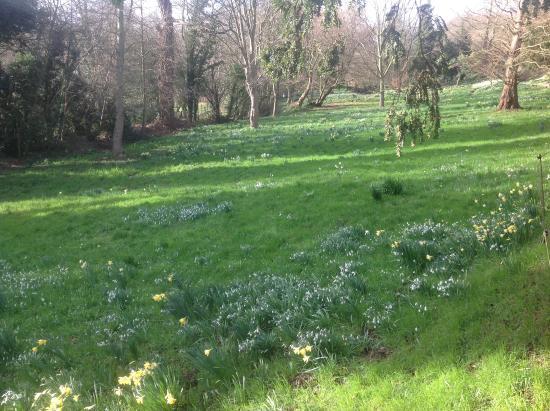 Enfield, UK: Meadow