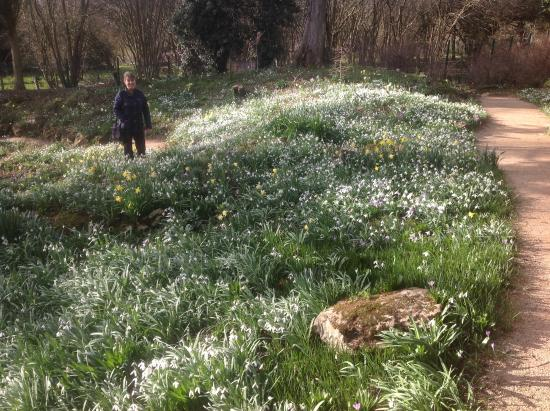 Enfield, UK: Snowdrop time