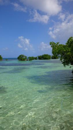 Basse-Terre Photo