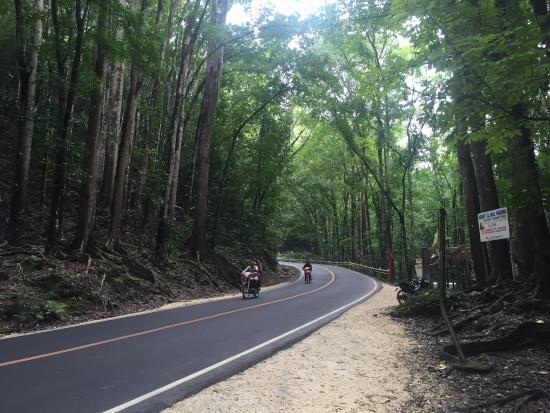 Loboc, Φιλιππίνες: Mahongany Forest
