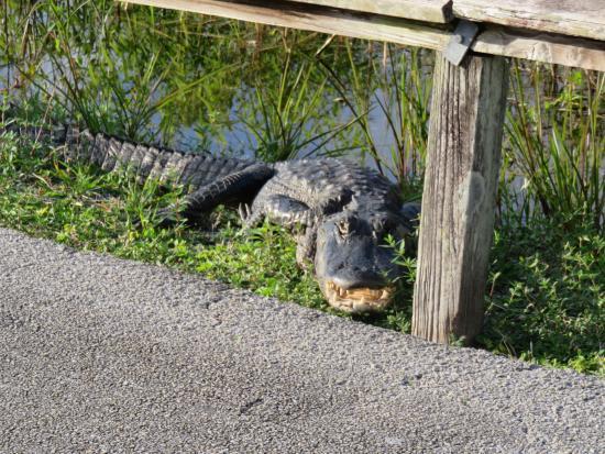 플로리다 시티 사진
