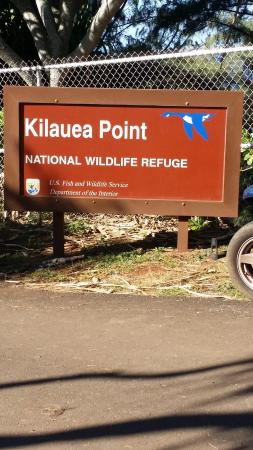 Kilauea Photo