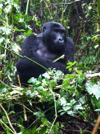 Bwindi Impenetrable National Park, Uganda: Poser!