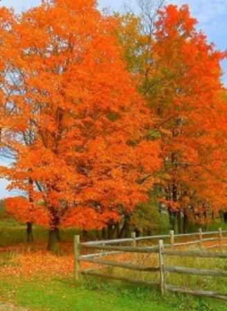 Naples, NY: Fall at Mountain Horse Farm