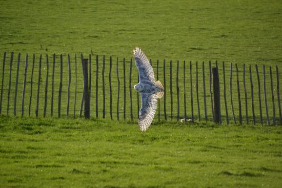 Helmsley, UK: photo0.jpg