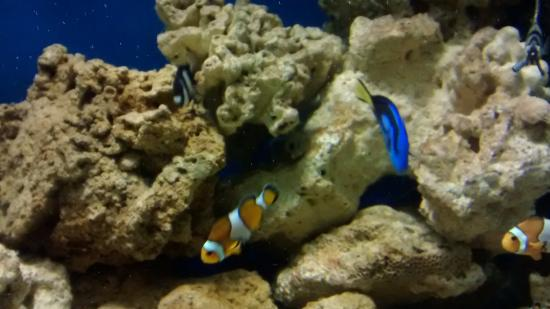 Star fish - Picture of Galway Atlantaquaria, Galway - TripAdvisor