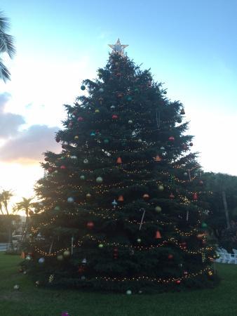 Gasparilla Inn & Club: christmastree