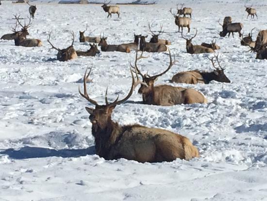 National Elk Refuge : photo2.jpg