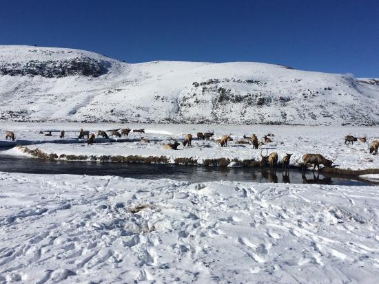 National Elk Refuge : photo3.jpg