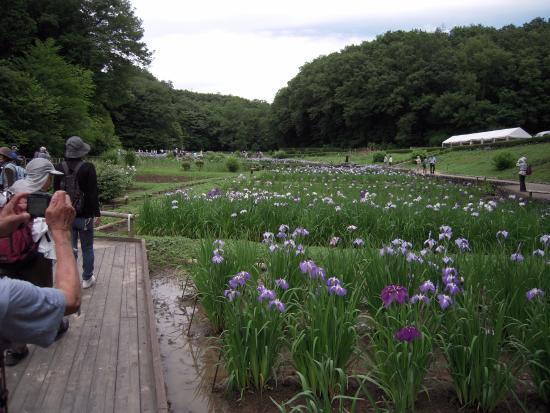 Fukiage Shobu Park