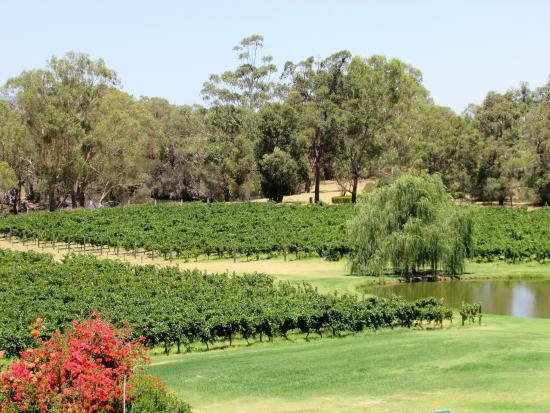Swan Valley, Avustralya: A lovely setting at Sandalford