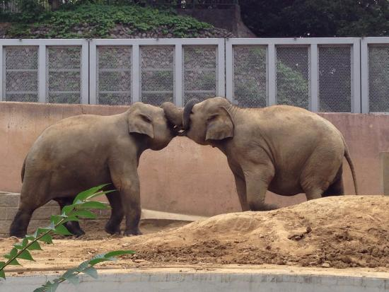 ぞうさん - Picture of Tama Zoological Park, Hino - TripAdvisor