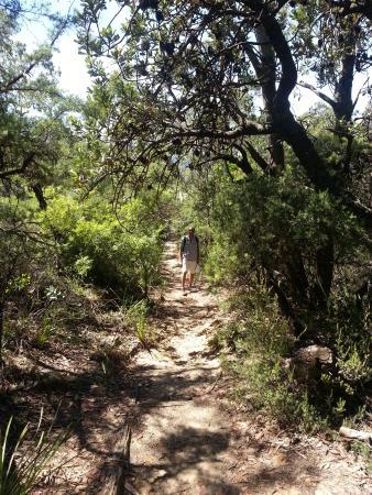 Leura, Australien: Walk way