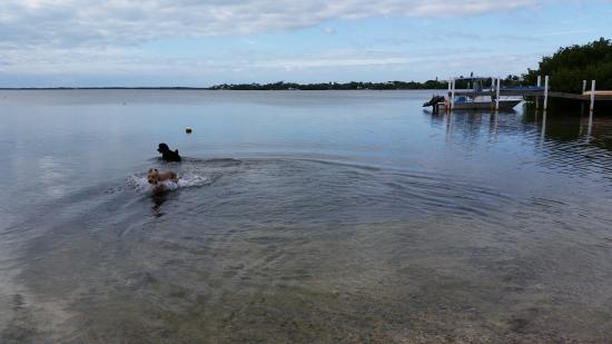 Cudjoe Key, FL: Backyard Morning Swim