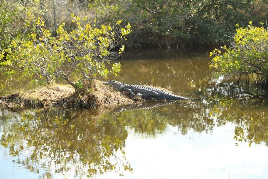 Cocoa, Floryda: Wildlife area at Canaveral National Seashore