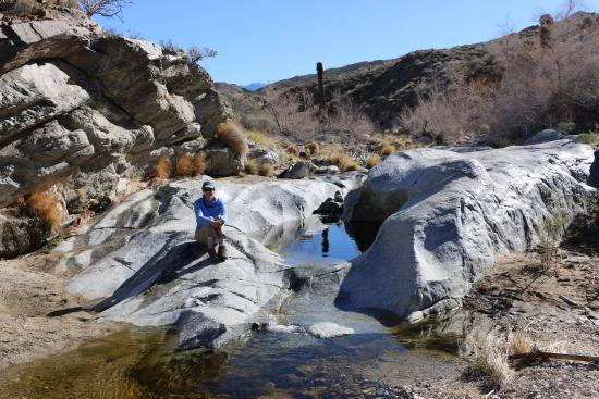 Palm Canyon: The Stone Pools