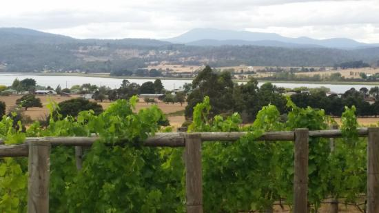 Stoney Rise Vineyard