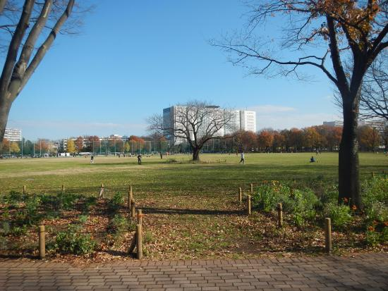 Musashino Chuo Park