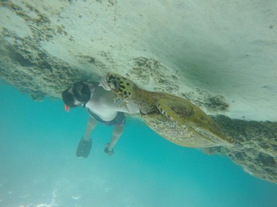 Blue Marlin Dive - Gili Trawangan: G0940371_large.jpg