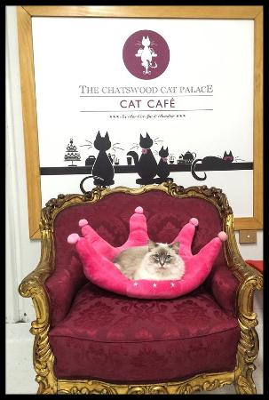 Roseville, Australia: Queen Sasha on her throne!