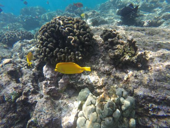 Keauhou, Hawái: A spectacular view of fish and coral
