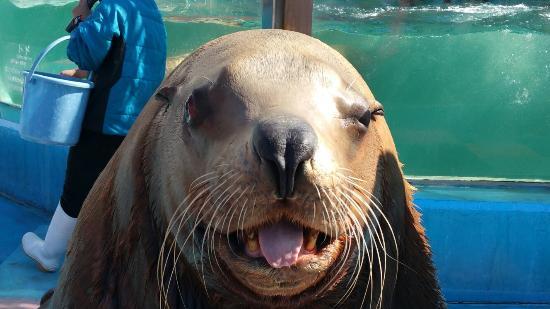 Ise Meotoiwa Interactive Aquarium (Ise Sea Paradise)