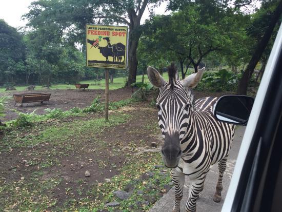 taman safari indonesia ii prigen picture of taman safari prigen rh tripadvisor co za