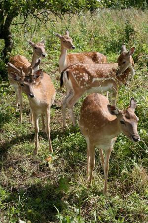 Паневежис, Литва: Deer
