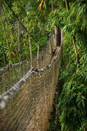Jardin de Balata: Passerelle d'observation, haut dans les branches.