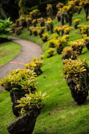 Jardin de Balata: Parterre de végéteaux.