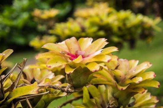 Jardin de Balata: Belle plante.