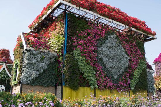 nice flowers on the house  picture of dubai miracle garden, dubai, Beautiful flower