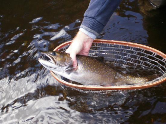 Rangeley, Μέιν: Fish 4