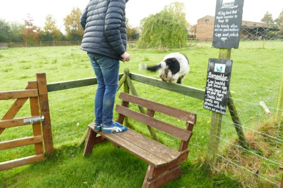 Hrabstwo Wicklow, Irlandia: Visiting the animals