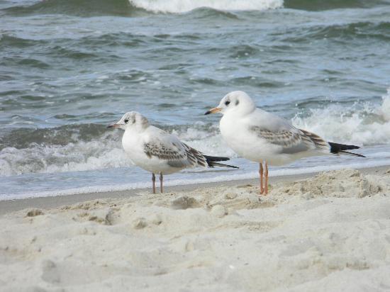 Miedzywodzie, Polonya: Plaża Międzywodzie