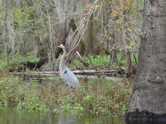Canoe Escape: Vogel